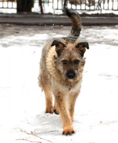 http://borodatiki-beda.narod.ru/DogsCatalogue/Julia_04.jpg